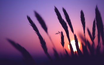Purple,light,Sunset,Timeless