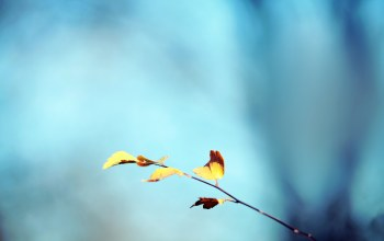 golden,autumn,background,leaf,blue,bokeh
