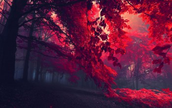 forest,Red,landscape,eerie