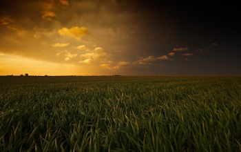 over,Corn,field,Sunset