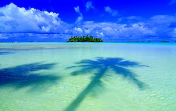 tropical,coconut,tree,island