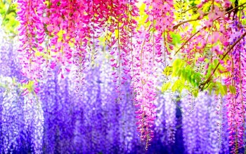 beauty,spring,colorful