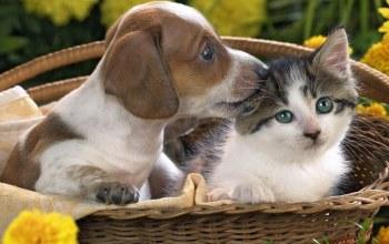 puppy,so,Kitty,sweet,kissing,cat