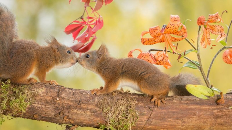 squirrels,cute