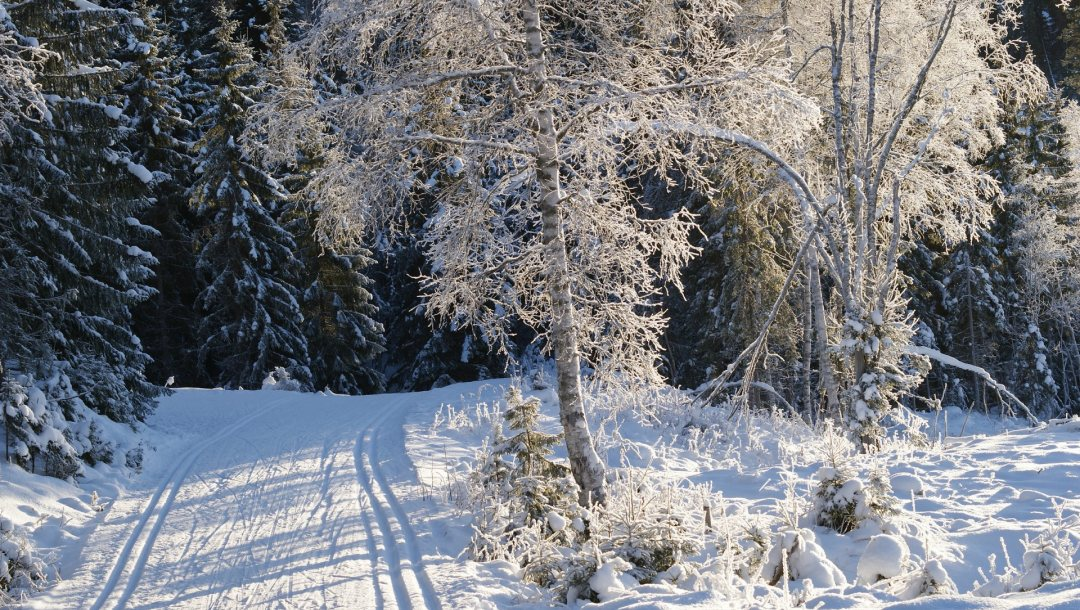 Road,forest,snow