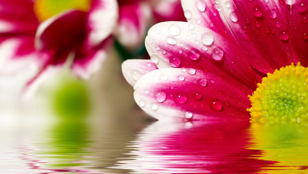 flower,reflections