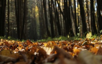 forest,осень,trees,autumn,leaves