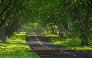 Road,summer,greens,лето