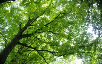 trees,leaves,branches
