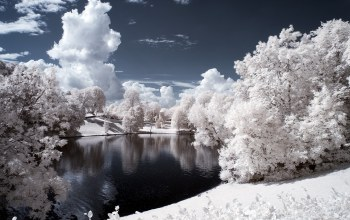 иней,snow,frost,trees,winter,the