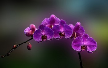 Purple,Orchid,cute,flower