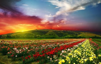 scenery,fields,beautiful,flower