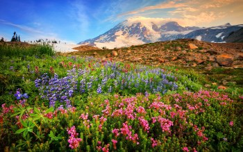 mountain,flower,landscape