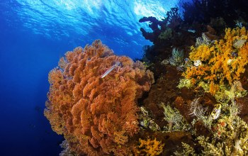 corals,underwater world,подводный мир,кораллы