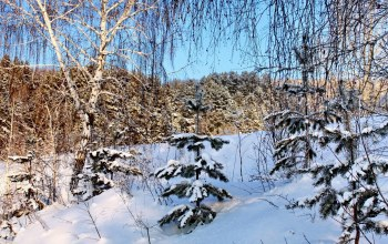 birch,winter,Берёза,snow