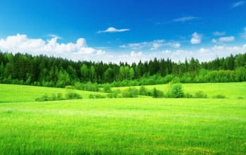 field,summer,greens,forest,лето
