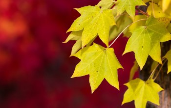 autumn,leaves,photography
