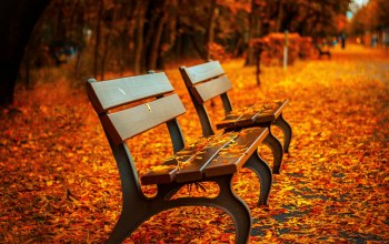 bench,autumn