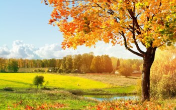 autumn,season,scenery,fall