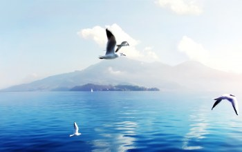 Switzerland,seagulls
