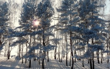 snow,ate,rays,winter,лучи