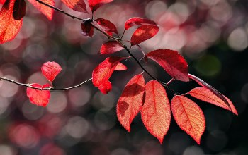 autumn,leaves,Red,осень,branch