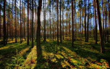 forest,лучи,rays,trees