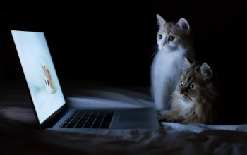 cute,kittens,animals,laptops,computer,Cats,funny,felines