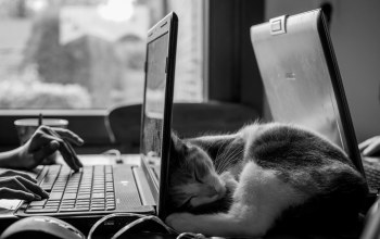 desk,monochrome,sleeping,muzzle,b&w,fur,mood,cat,Mustache,ears,situation,Animal,feline,black & white,computer,laptop,photo,work