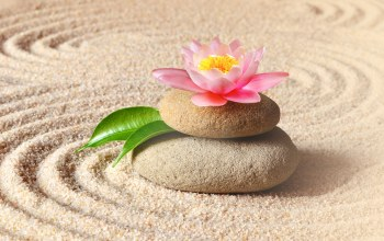 Spa,stones,flower,sand,zen,цветок