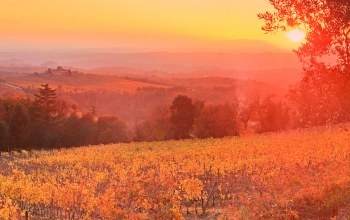 Tuscany,Sunset,Vineyard,italy