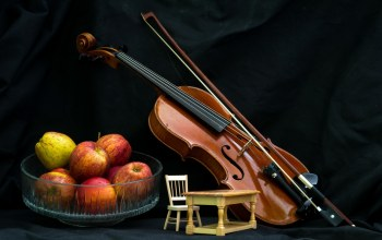 photography,Violin