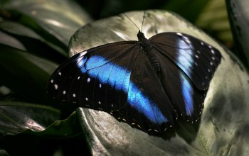 dark,surface,Butterfly,wings