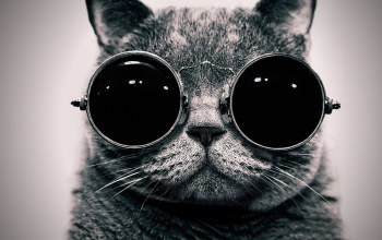 sunglasses,cat,hipster,funny