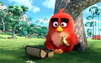 Birds,angry,movie,Red