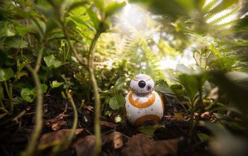Drone,vegetation,cute,robot,forest,Bb-8,kawaii,episode vii,Star wars: the force awakens,jungle