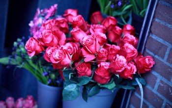 beautiful,Red,roses,basket
