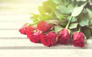 Red,roses,Valentine`s day,красные розы