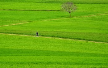 countryside,fields,farmland,way,pathway,rider,tree,path,grass,bike