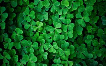 shamrock,leaves