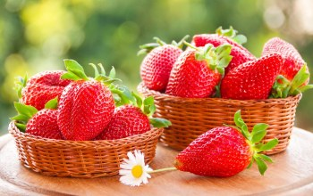 basket,fruit,strawberries,cute