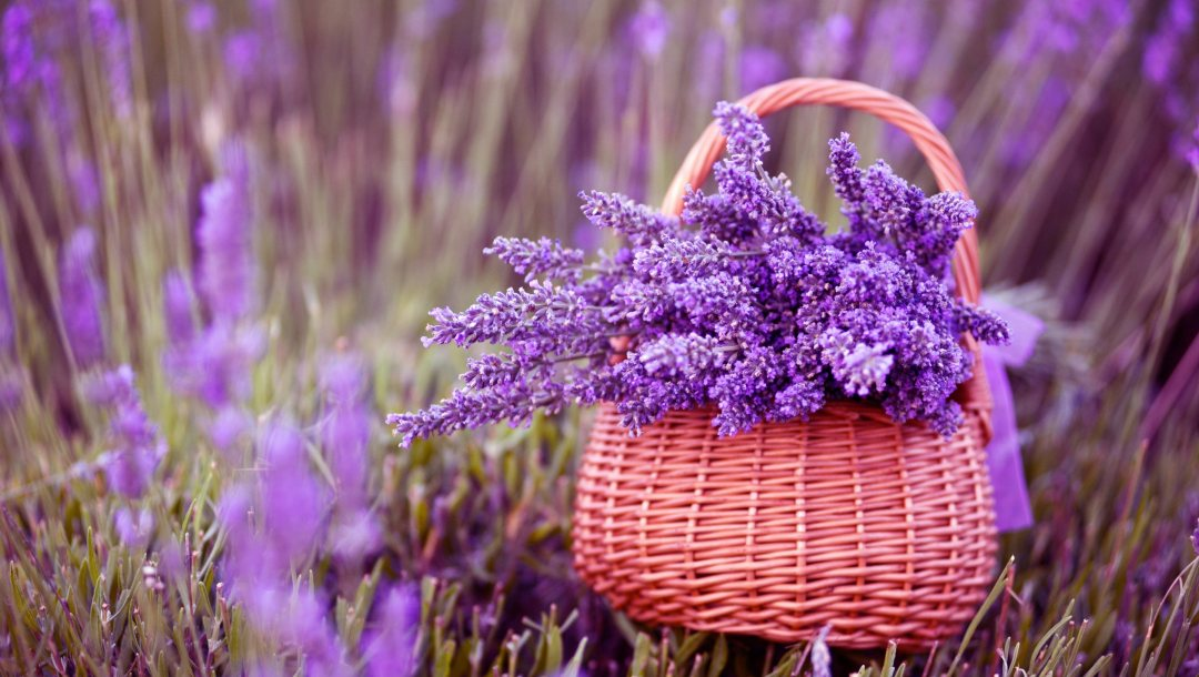 Bouquet,photography,lavender