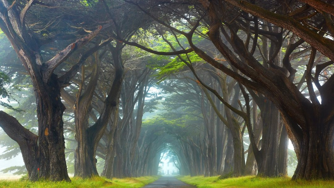 ireland,trunks,Road,branches,landscape,grass,leaves,Tunnel,trees,mist