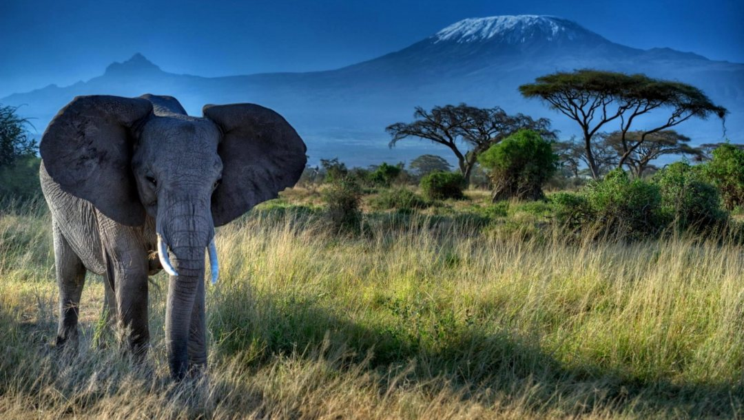 african,elephant,forest