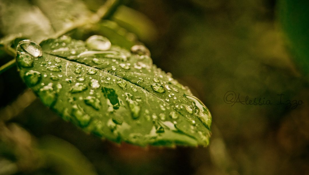 with,morning,drop,leaf,water
