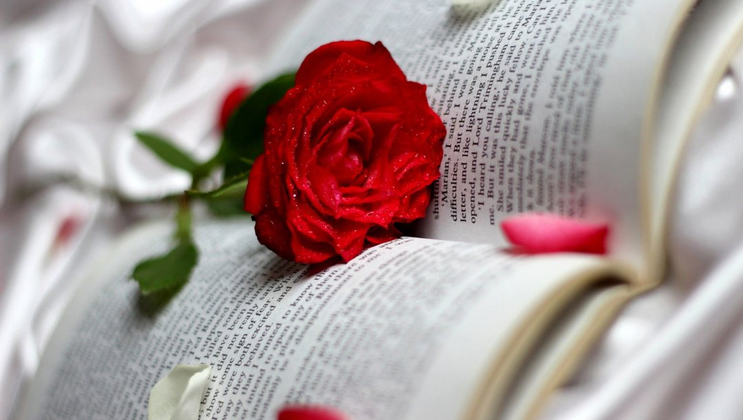 Red,book,rose,single