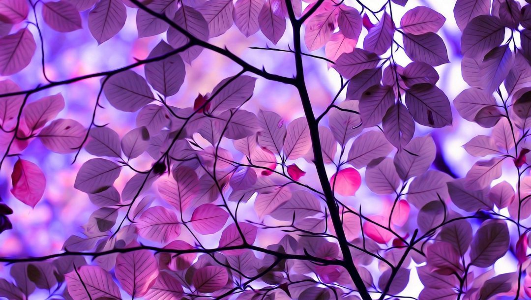 leaves,Purple