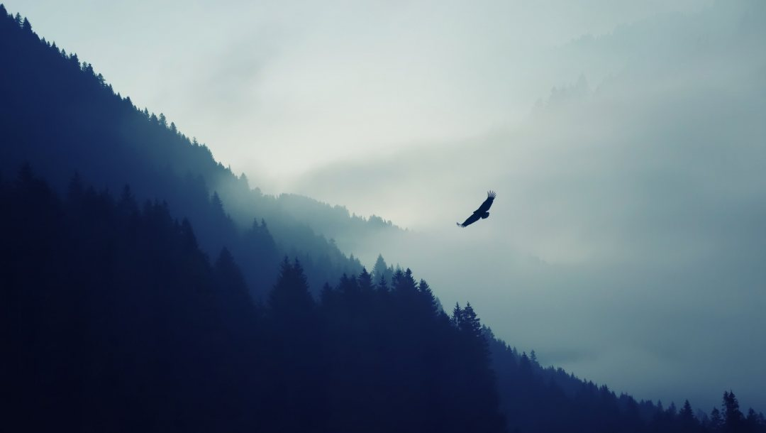 fog,eagle,valley,forest,mountain