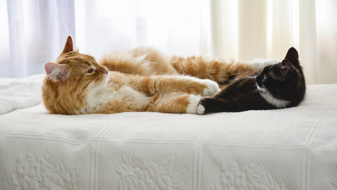 bed,looking each other,friends,Cats