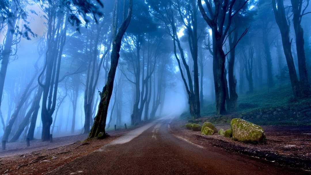 misty,forest,Road